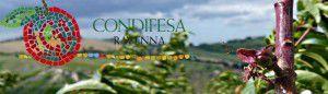 cropped-CondifesaRA-Nettarina.jpg