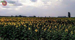 Condifesa Ravenna - Agrea 27,71percento