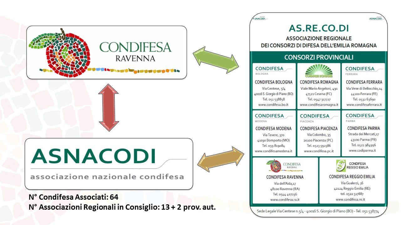 Presentazione Condifesa Ravenna Asnacodi Asrecodi