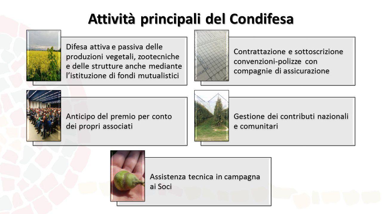 Presentazione Condifesa Ravenna Attività