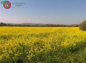 Condifesa Ravenna - Fiori Meldola