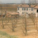 Boncellino 29-06-1986 Casa