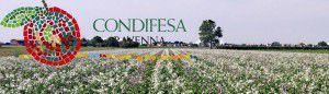 CondifesaRA-RavannelloSeme-Ravenna-10-05-2014.jpg